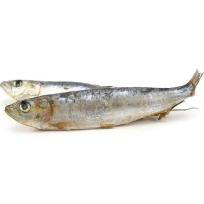 sardines raw dog food