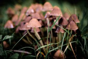 Green's Medicinal Mushrooms