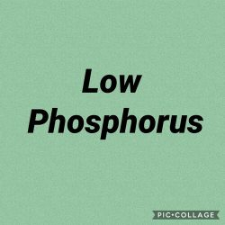 Special diets, including low phosphorus.